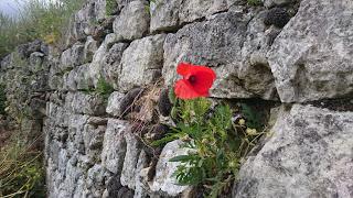 Fleur mur